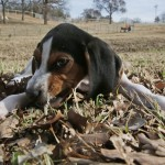 Shoo, Flea! How To Rid Your Pet Of Parasitic Pests