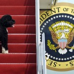 Obamas' Dog Bo, Once A White House Celebrity, Dies From Cancer