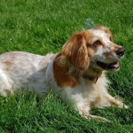 These Dog Breeds Are Gaining Popularity In The Us