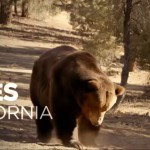 Campaign Stunt, Ads Bring California Recall Into New Phase
