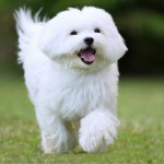 Most Popular Dog Breeds That Don't Shed