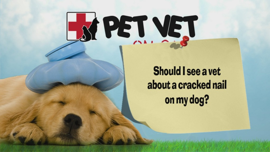 """Petvet: """"when Should I See A Vet About A Cracked Nail On My Dog?"""""""