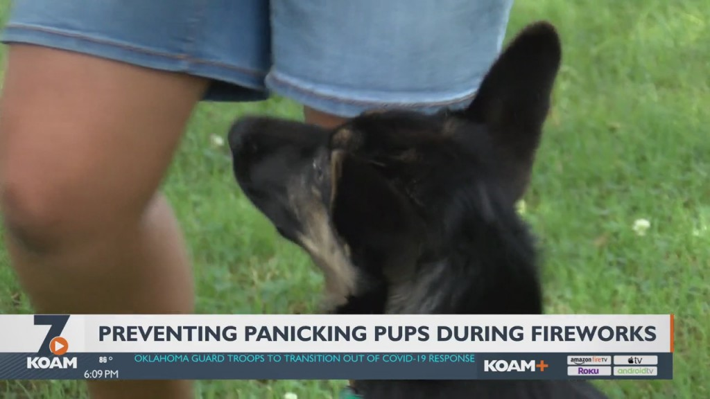 Loud Fireworks Can Cause Problems With Out Pets
