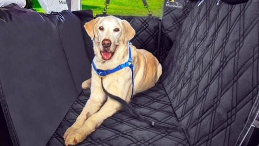 5 Best Dog Seat Covers For 2021