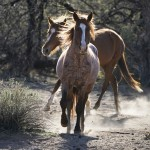Us Vows To Improve Protections For Wild Horse Adoptions