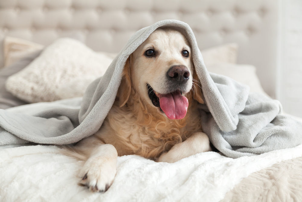 Pet Friendly Hotels You May Not Have Heard Of