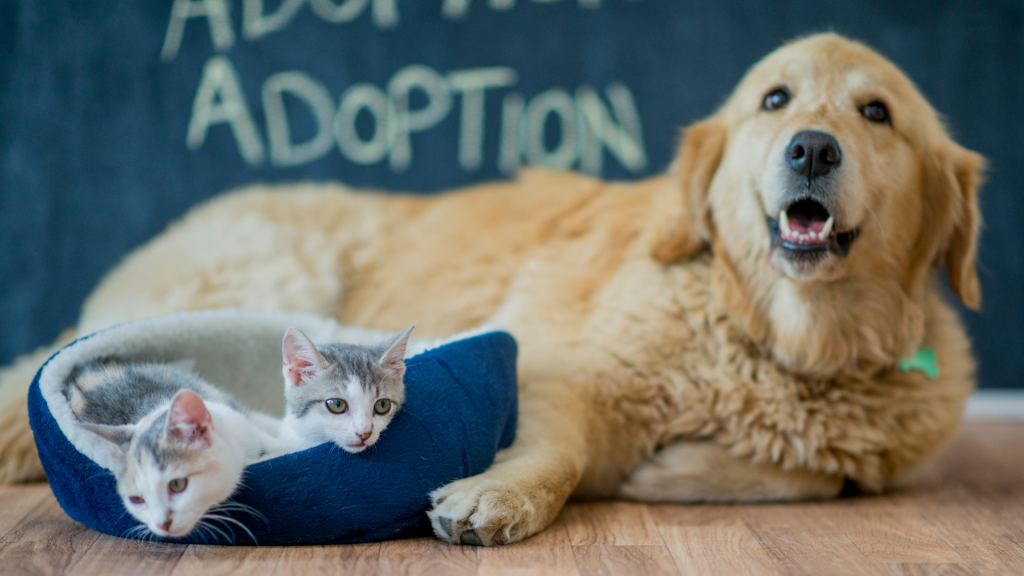 Dog And Cats For Adoption