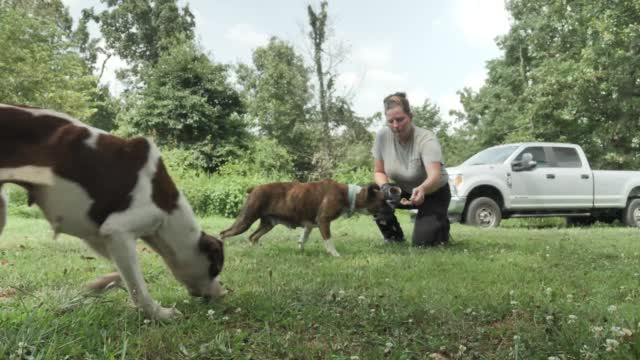 21 Dogs Rescued In Mcdonald County Get Treatment