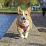 A More Comfortable Goodbye? Pet Euthanasia At Home Up In Pandemic