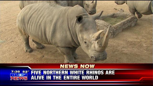 Northern white rhino dies at SD Zoo Safari Park, leaving five re