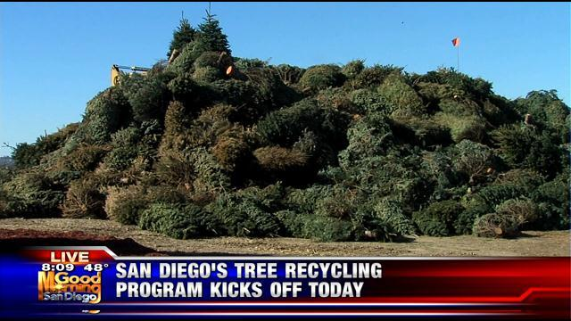 - Many Options Available For San Diego Christmas Tree Recycling