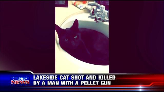 Lakeside cat shot and killed by a man with pellet gun