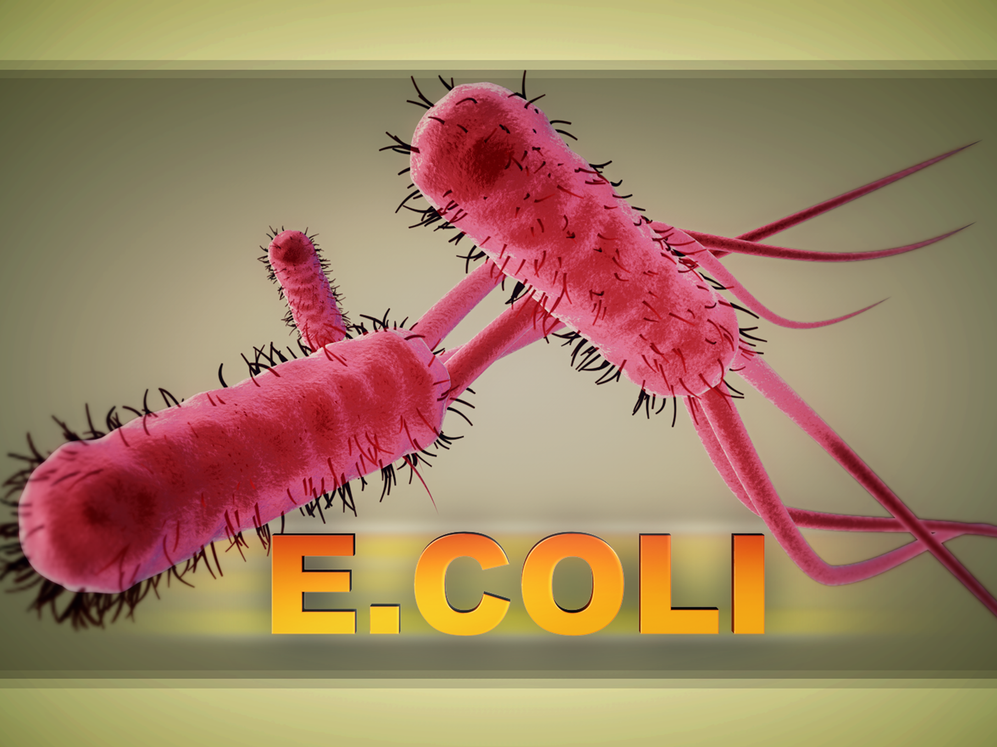 Update: 2-year-old boy dies from E  coli contracted at San
