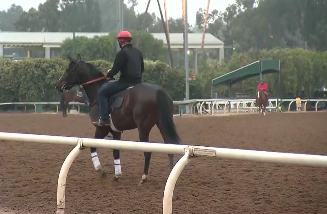 Judge Allows Horse Trainer Jerry Hollendorfer To Return To