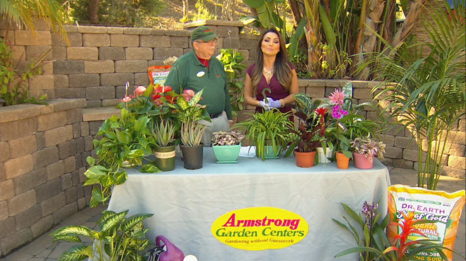 Pet Friendly Houseplants From Armstrong Garden Centers