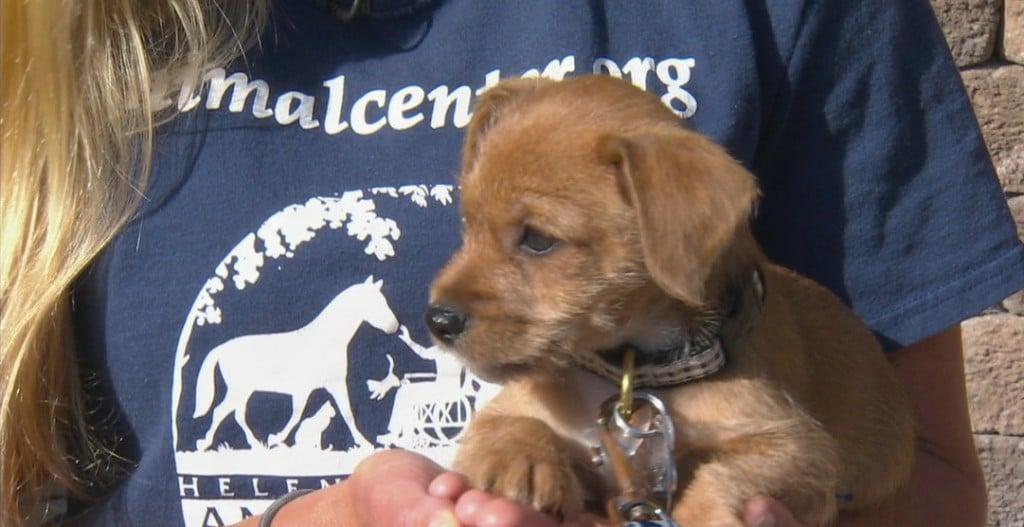 Helen Woodward Adopt A Pet: Bob