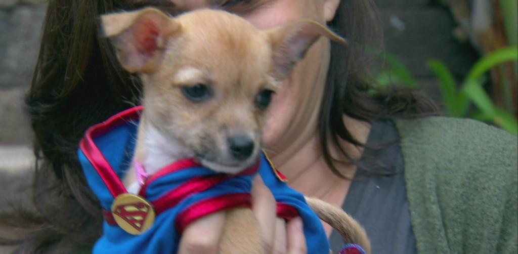 Helen Woodward Animal Center Adopt A Pet: Supergirl
