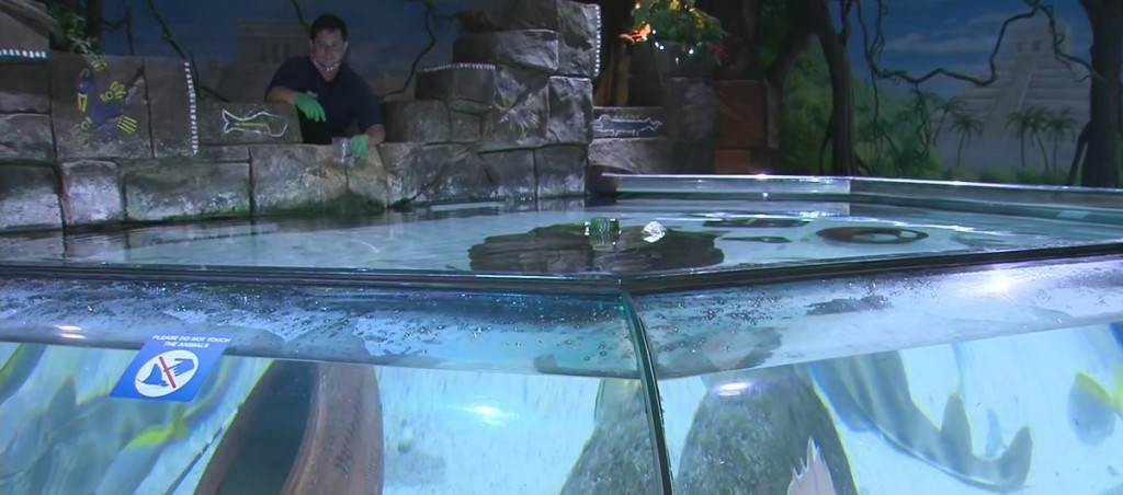Sea Life Aquarium Reopens