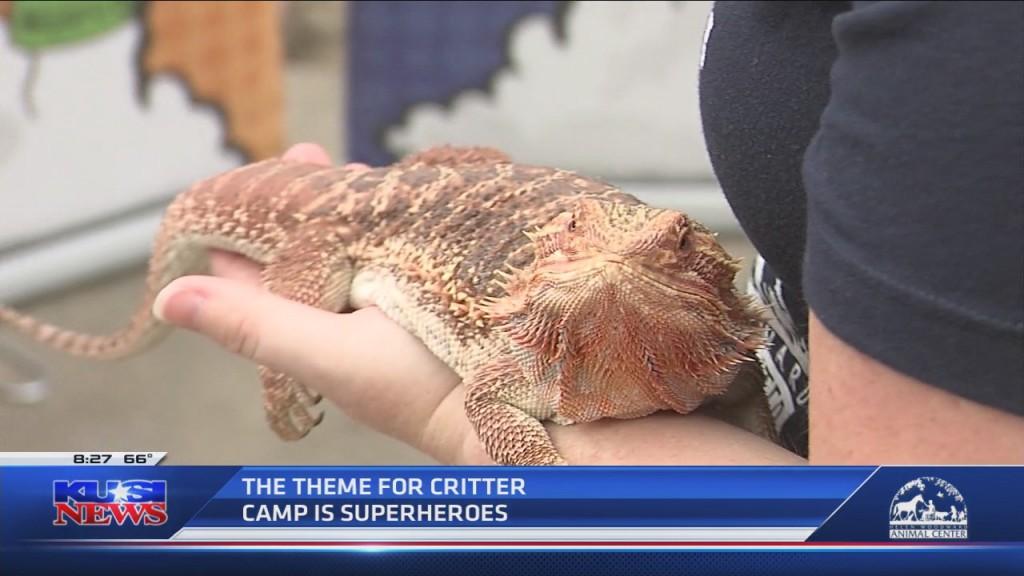 Hwac Virtual Critter Camp