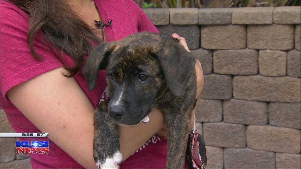 Helenwoodward Animal Center Adopt Flip