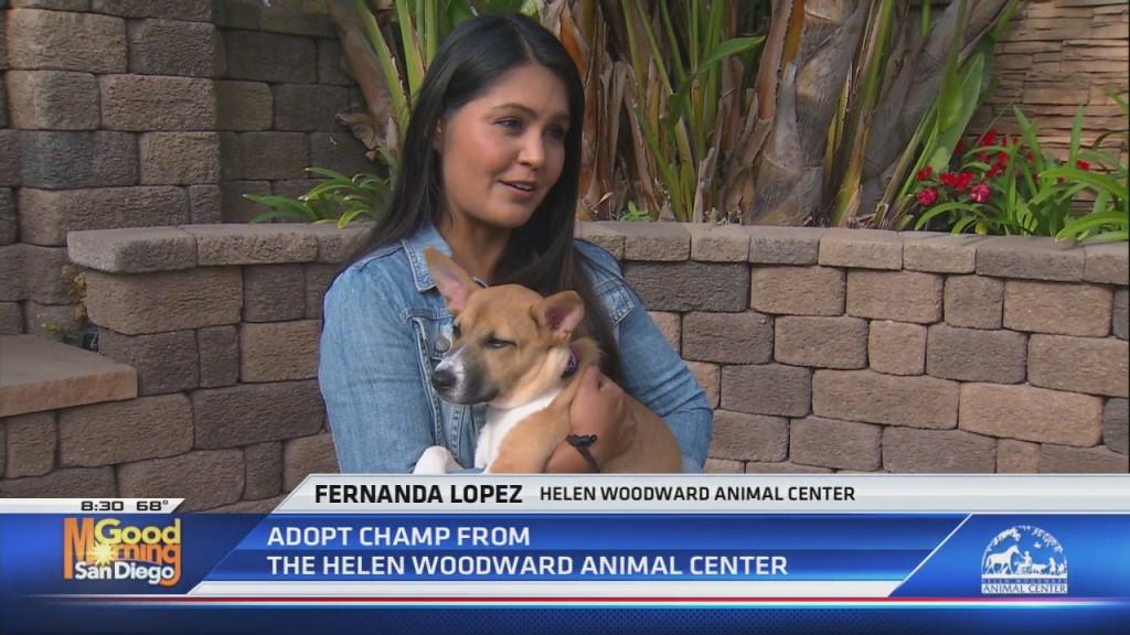 Hwac Adopt A Pet: Champ