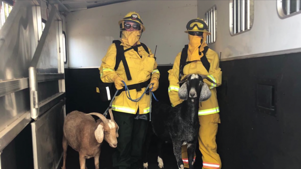 Animal Services Sd Humane Society Valley Fire