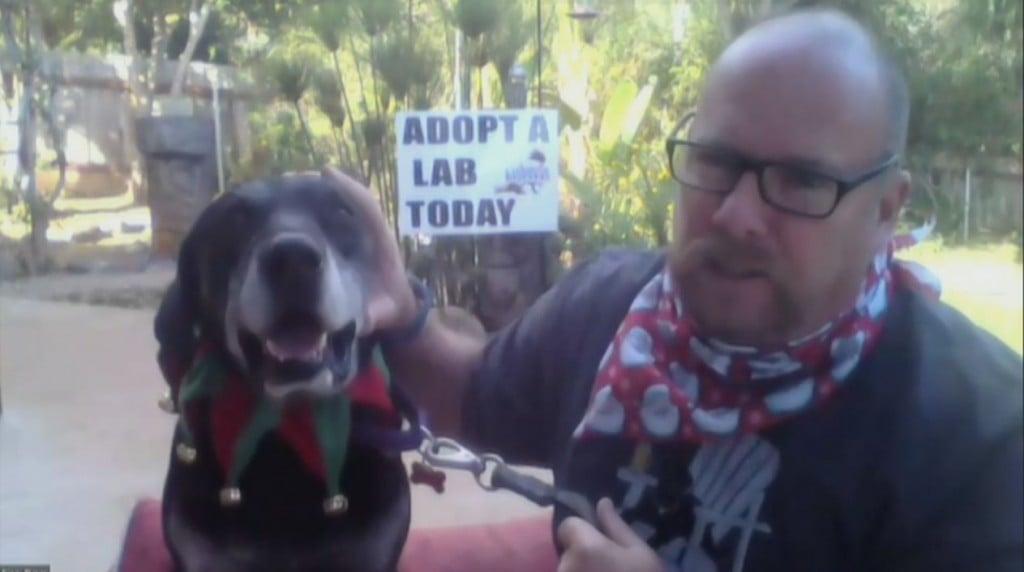 Adopt Bear