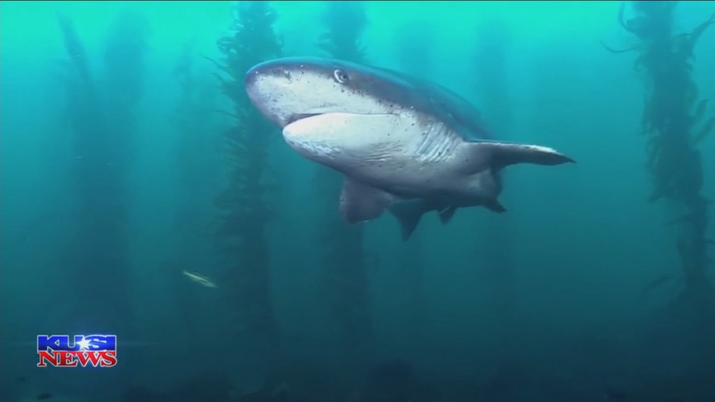 Dave Scott's World Of Wonder: Coastline Sharks
