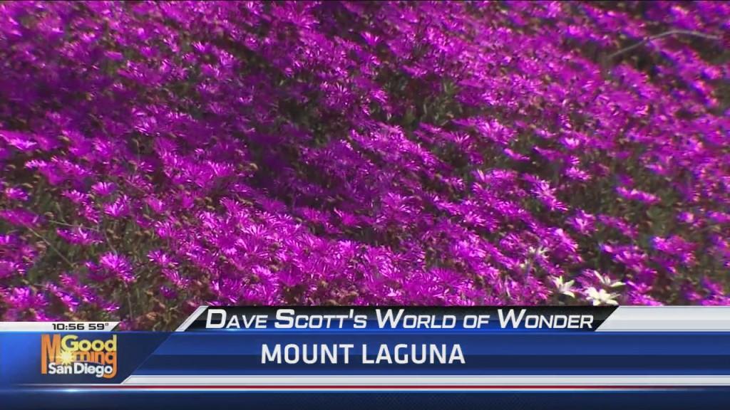 Dave Scott's World Of Wonder: Mount Laguna