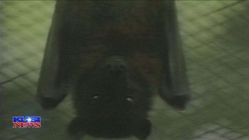 Dave's World Of Wonder: Bats