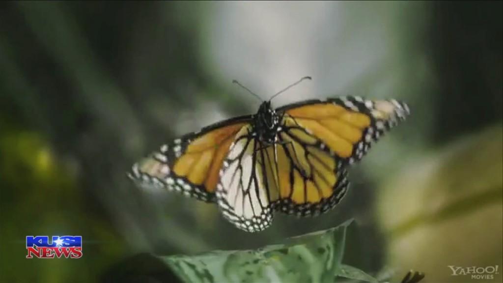 World Of Wonder: Monarch Butterflies