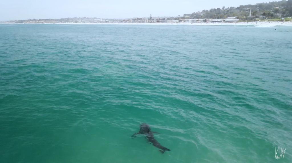 Kian Hoover Shark