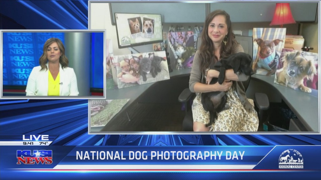 National Dog Photography Day With Helen Woodward Animal Center