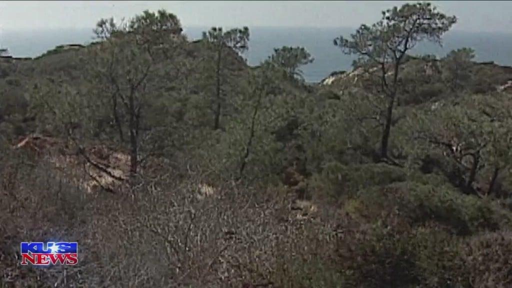 World Of Wonder: Torrey Pines State Reserve