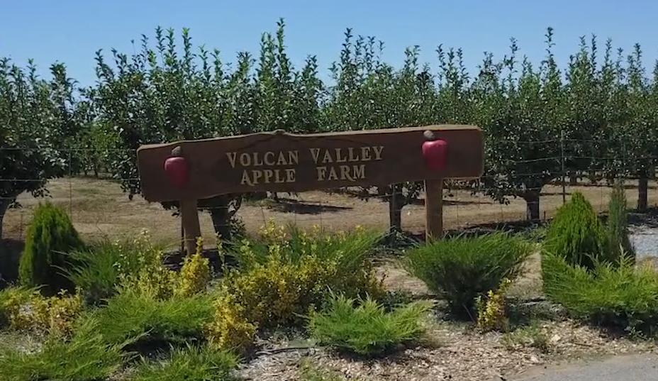Volcun Apple Farm