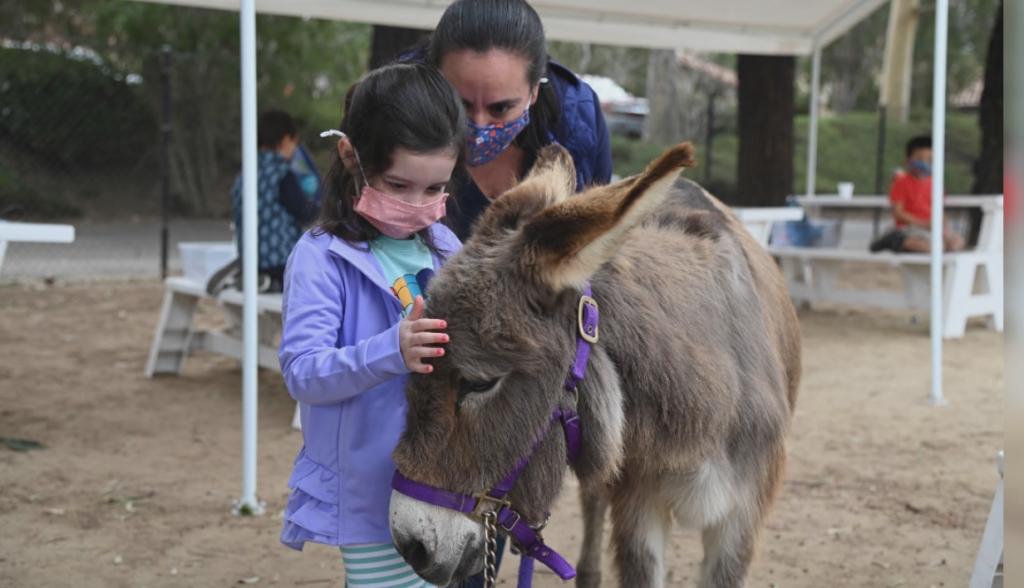 Child Animal Care Camp