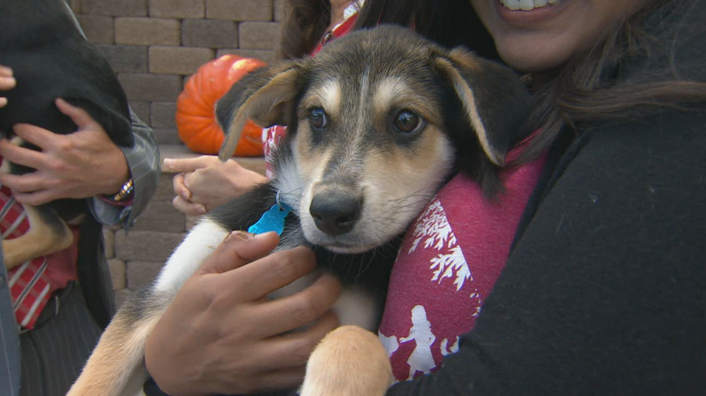 Helen Woodward Pets For Veterans Day