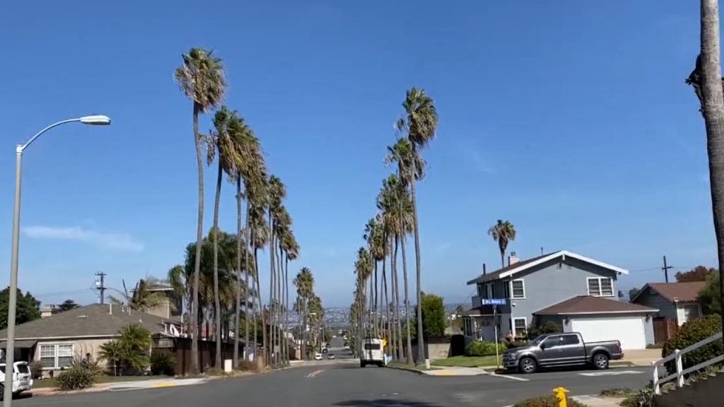 Point Loma Palm Trees