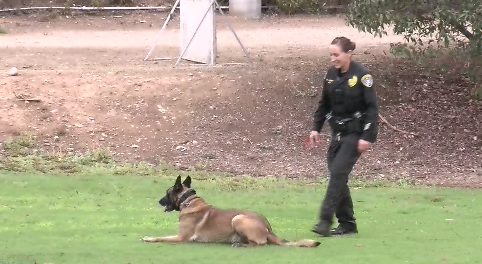 An Inside Look At The San Diego Police Department K 9 Training Facility