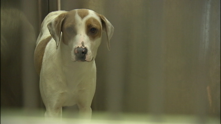 SCRAPS seeing big increase in calls for unsheltered pets left in the cold