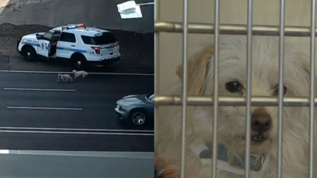 Pair of pups lead police on a high-speed chase
