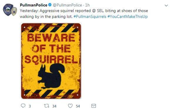 Pullman police issues aggressive squirrel warning