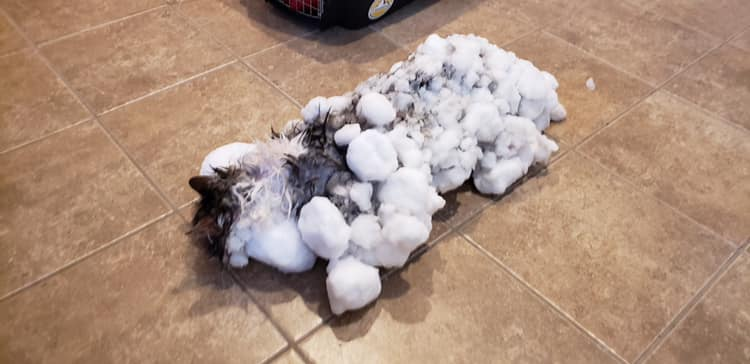 Amazing rescue for frozen kitty