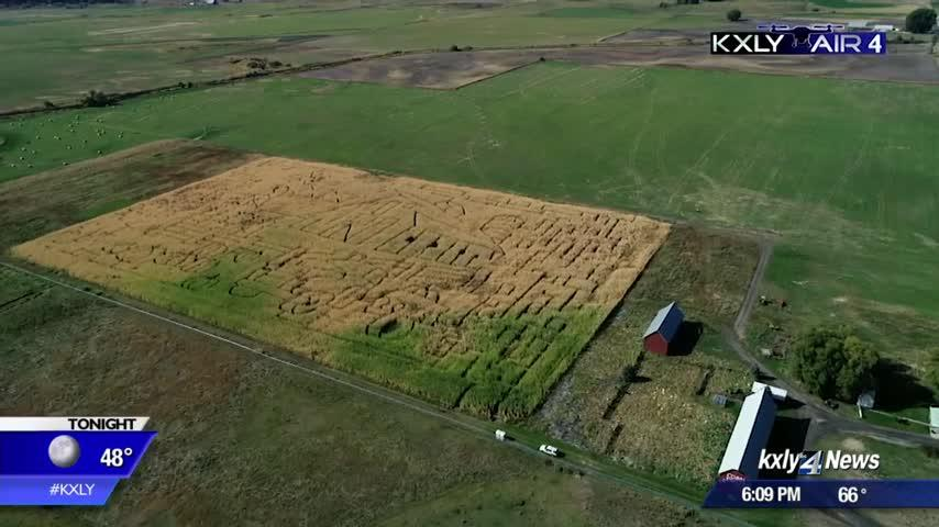 Air 4 Adventure: Colville Corn Maze