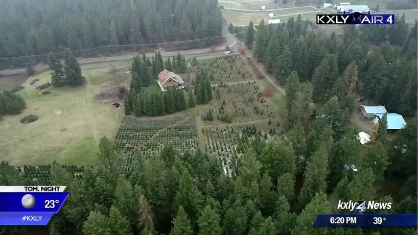 Air 4 Adventure: Theodore's Thicket