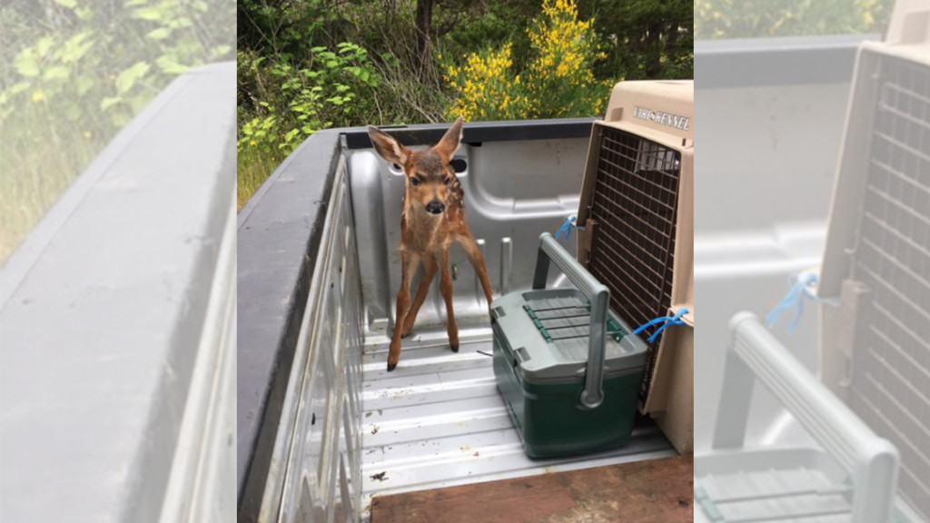 Wildlife officials: Don't touch the baby animals