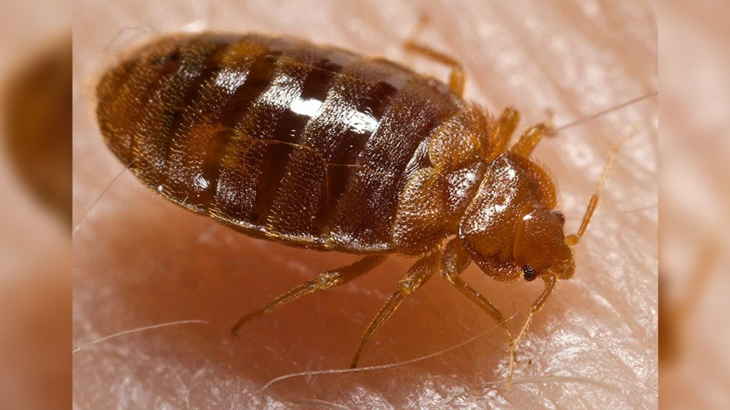Battling bedbugs: Local nonprofit helps people in need find clean furniture