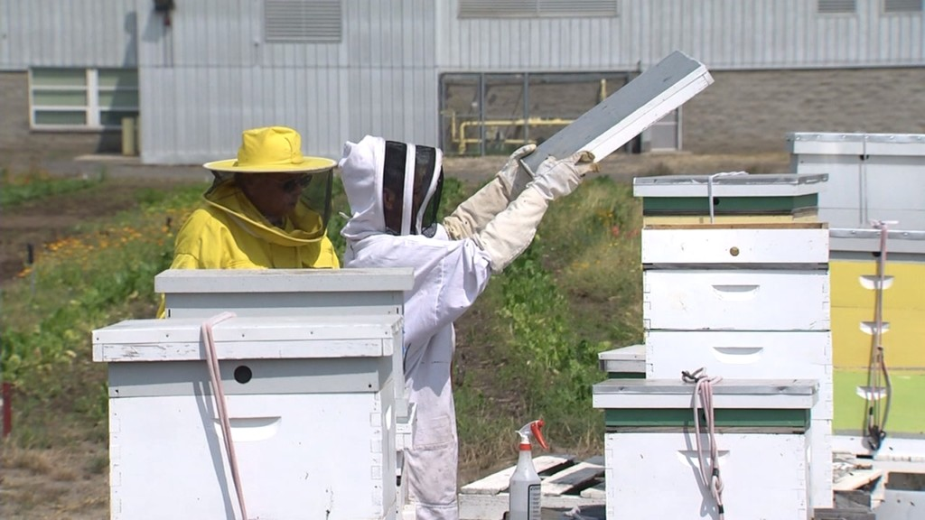 Inside the beekeeping program at Airway Heights Correction Center