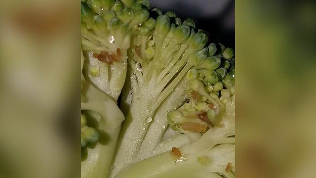 Bugs found in broccoli at Chiawana High School