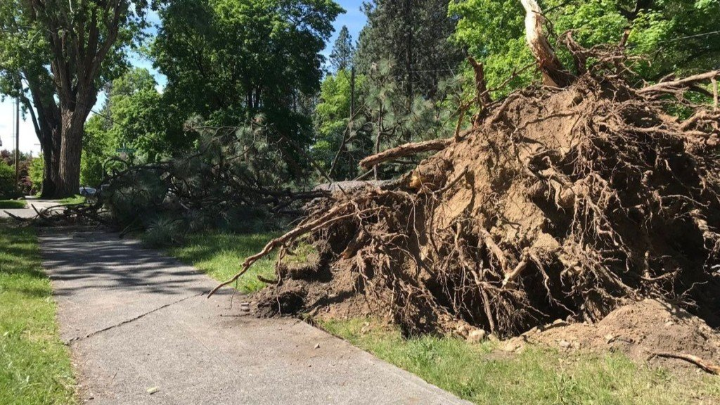 City crews to begin removing massive tree blocking Browne's Addition intersection